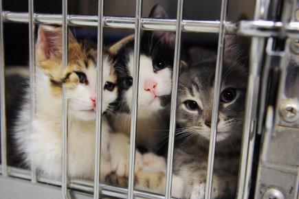 La SPCA Saguenay a un urgent besoin d'argent... (Archives Le Quotidien)