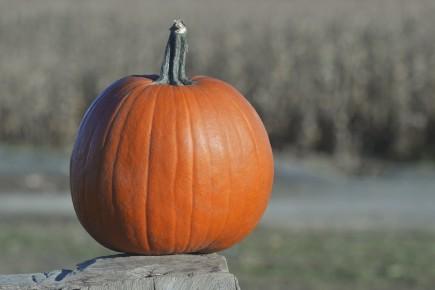 CHRONIQUE / L'Halloween est sans doute l'une de mes fêtes préférées. J'adorais... (Archives Le Soleil)