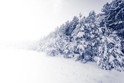 CHRONIQUE / «Heureusement qu'il y a l'hiver, pour congeler les bibittes!»... (123rf)