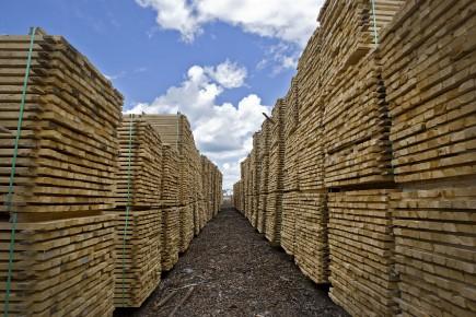 TRIBUNE / Conflit du bois d'oeuvre - Le directeur du Centre de recherche sur la... (Archives, La Presse)