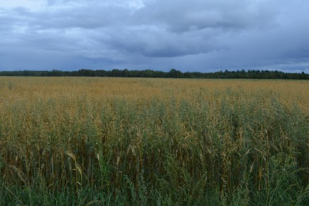 «De fait, la relève agricole nécessite de plus... (Archives Le Quotidien, Louis Potvin)