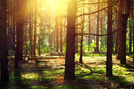 Planter des arbres aujourd'hui, surtout d'espèces en danger,... (Photo 123RF)