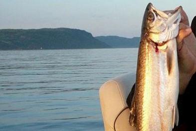 Dans la rivière Saguenay, il se capture près... (Archives Le Quotidien)