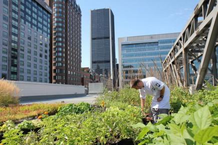 L'agriculture urbaine poursuit son expansion sur le toit du Palais des congrès de l'édifice avec la mise en place d'un jardin vertical l'an dernier.