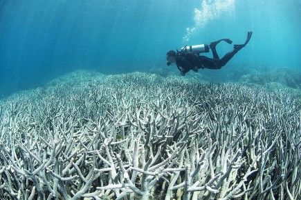 AUSTRALIA-ENVIROMENT-CONSERVATION-BLEACHING-REEF-CLIMATE