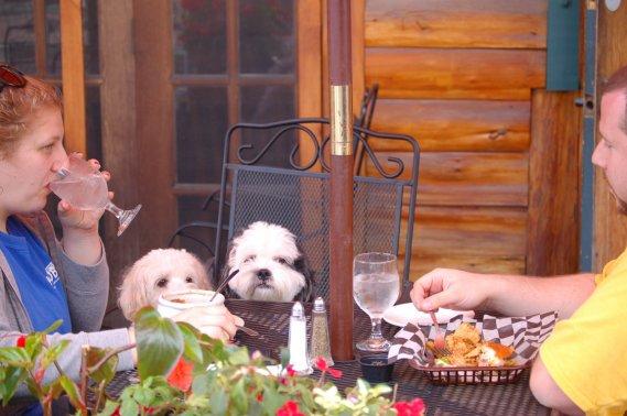 Plusieurs restaurants acceptent les chiens sur leur terrasse. (Émilie Bilodeau, La Presse)