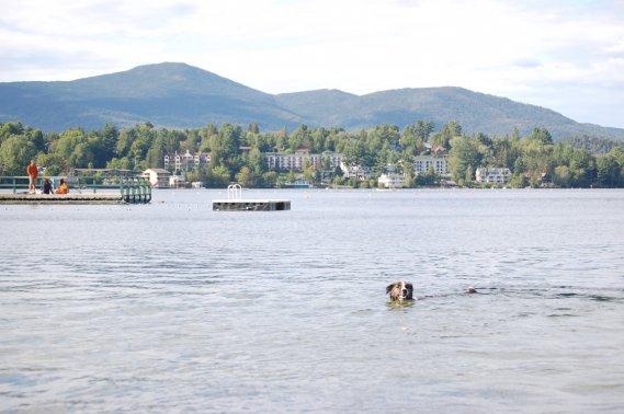Il n'y a qu'à se rendre au bout du Miror Lake pour constater que la destination est prisé des touristes et de leurs chiens. À toute heure de la journée, des chiens s'amusent à nager dans l'eau. (Émilie Bilodeau, La Presse)