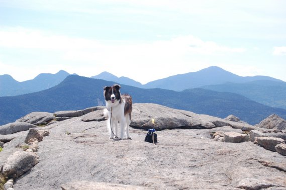 Au sommet de Cascade Mountain, Moka admire le paysage. (Émilie Bilodeau, La Presse)