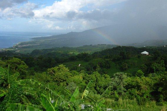 Martinique de mon coeur 450438