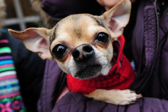 http://images.lpcdn.ca/569x379/201112/24/454740-animal-survecu-prix-soins-veterinaires.jpg