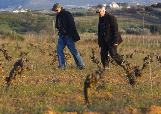 L'importateur montréalais Theo Diamantis et Vassilis Papagiannakos marchent au milieu des vieilles vignes de savatiano. (Photo François Roy, La Presse)