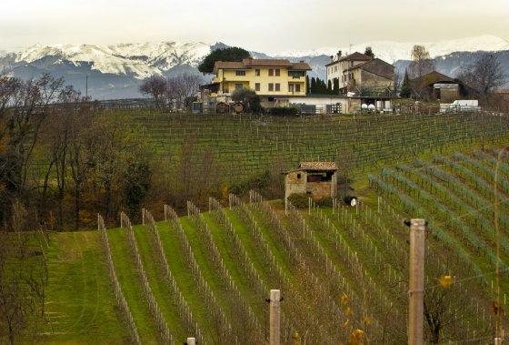 Les vignobles de prosecco de Vialdobbiadene, à 70 km de Venise (Martin Chamberland, La Presse)