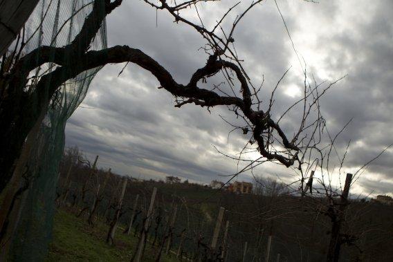 À Vialdobbiadene, on profite de la saison froide pour émonder les vignes. (Martin Chamberland, La Presse)