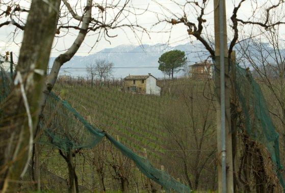 Un autre vignoble de Vialdobbiadene, où chaque hectare  peut être vendu un million de dollars. (Martin Chamberland, La Presse)