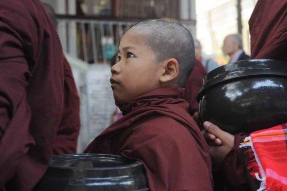Un plus petit et plus jeune qui veut aussi son repas quotidien. Amarapura. (Photo: Claude Gill)