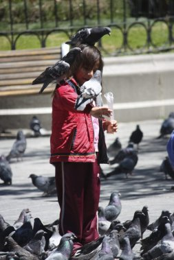 Les pigeons animent la Place Murillo. (Photo Sylvain Sarrazin, La Presse.)