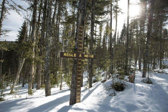 C'est dans la forêt Montmorency que, depuis 1964, la faculté de foresterie de l'Université Laval réalise divers travaux de recherche sur l'aménagement du paysage forestier. (Photo Olivier Pontbriand, La Presse)