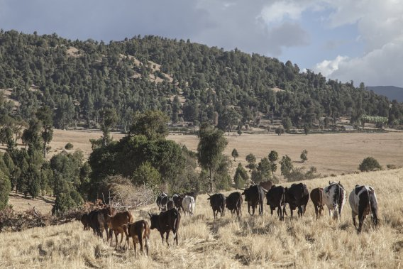 La première journée de marche nous fait passer àtravers des pâturages situés au pied des montagnes. (Photo fournie par Emmanuel Leroux-Nega)