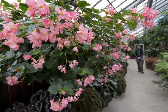Serres du Jardin botanique (Photo Robert Skinner, La Presse)