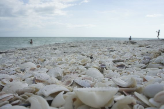 Les plages de Sanibel, du fait de leur orientation, sont des paradis pour les chasseurs de coquillages. (PHOTO MARIE-EVE MORASSE, LA PRESSE)