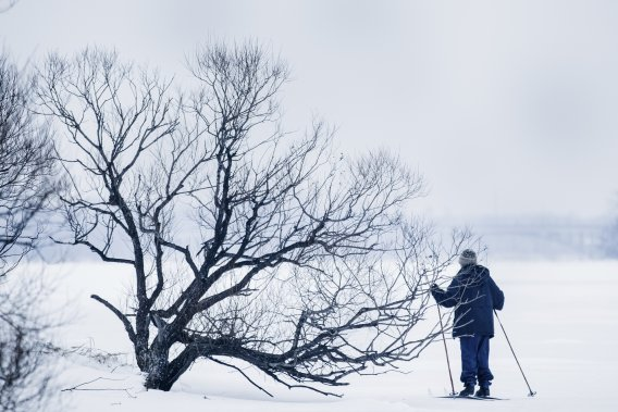 Le Parc-nature de l'île de la Visitation offre notamment 8,6 km de pistes de ski de fond. (PHOTO EDOUARD PLANTE-FRÉCHETTE, LA PRESSE)