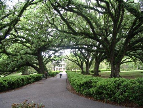 La magnifique plantation Oak Alley. (Photo Beth J. Harpaz, Archives AP)