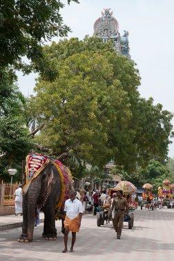 Régulièrement, les rues ceinturant le temple sont le théâtre de processions ou des hommes transportent des divinités sur des palanquins ou des chars. Ici, l'éléphant du temple mène le bal. (Photo Marie-Soleil Desautels, La Presse)