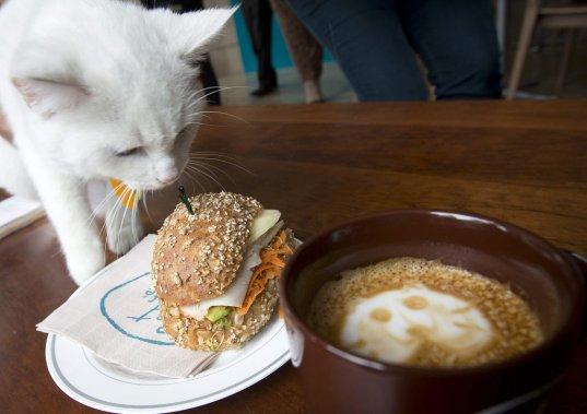 Un chat renifle un sandwich au Cat Café, à New York. (Photo CARLO ALLEGRI, Reuters)