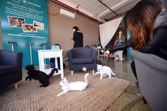Sept chats ont trouvé preneur dès le premier jour et les tenanciers de cet éphémère café espèrent que tous les animaux trouveront un maître d'ici la fin du week-end. (Photo Emmanuel Dunand, AFP)