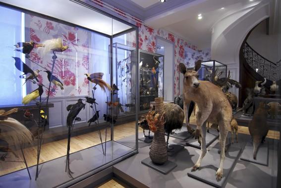 Le Muséum d'histoire naturelle propose un étonnant voyage aux quatre coins du monde. (PHOTO FOURNIE PAR L'OFFICE DE TOURISME DE LA ROCHELLE)