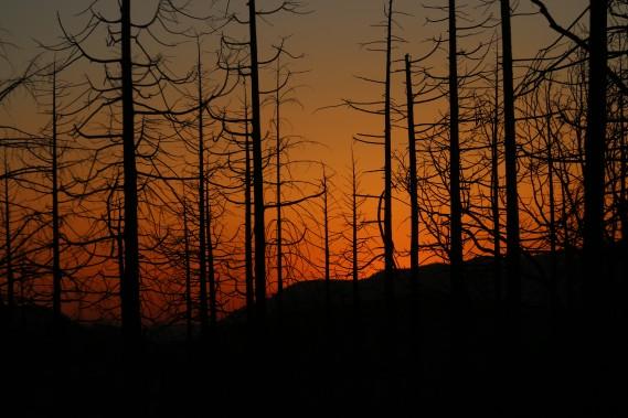 Le gigantesque incendie de 2013 a laissé quelques stigmates, en particulier à l'ouest du parc. (Photo Sylvain Sarrazin, La Presse)