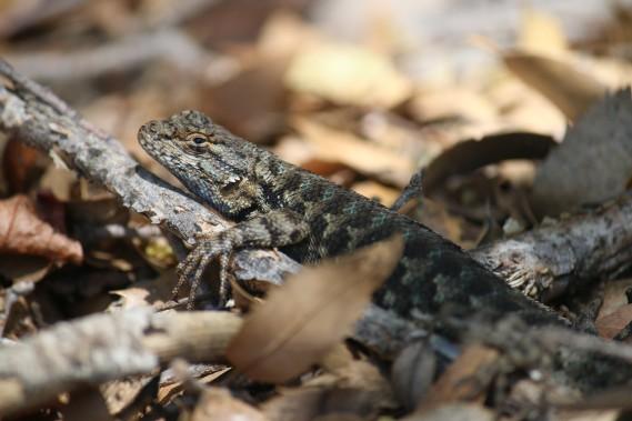 Gardez l'oeil ouvert: reptiles et oiseaux sont tapis dans les recoins du parc. (Photo Sylvain Sarrazin, La Presse)