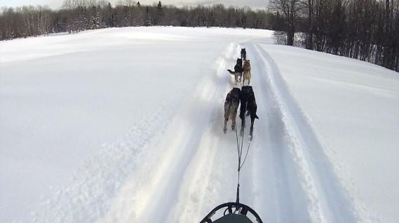 Des chiens de traineaux courent à toute vitesse dans l'étendue blanche du Michigan. (Associated Press)