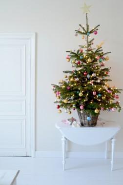 Sapin naturel en pot. Une solution écologique, puisqu'on peut conserver l'arbre après la période des Fêtes et le planter à l'extérieure au retour du printemps. (web.idiggreenacres.com)