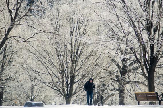 Ottawa aussi a goûté au récent cocktail météo, comme en témoignent les arbres du parc Major's Hill. (Photo Martin Roy, Le Droit)