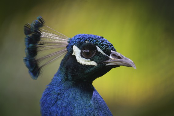 La faune peut être aussi colorée que la flore! (Photo Sylvain Sarrazin, La Presse)