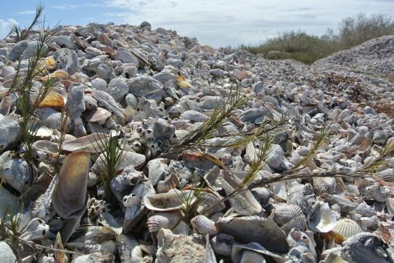 Lorsqu'on visite le cimetière d'huîtres, on saisit l'importance de la culture des perles dans l'île. (PHOTO DAVID RIENDEAU, COLLABORATION SPÉCIALE)