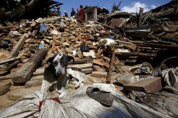 Un chien est assis au milieu des ruines à Bhaktapur, en banlieue de Katmandou, le 27 avril. (PHOTO Navesh Chitrakar, REUTERS)