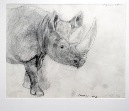 Étude de rhinocéros, 2012. Graphite, collection de l'artiste (Le Soleil, Jean-Marie Villeneuve)