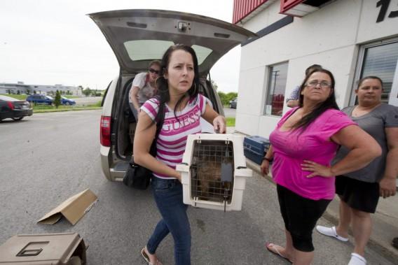 Vicky Villeneuve et Francine Beausoleil veille au transport des chiens à l'intérieur de la SPCA-Outaouais. (Martin Roy, LeDroit)