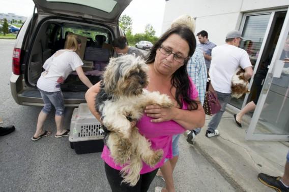 Francine Beausoleil s'assure que ce chien trouve sa place à la SPCA-Outaouais. (Martin Roy, LeDroit)