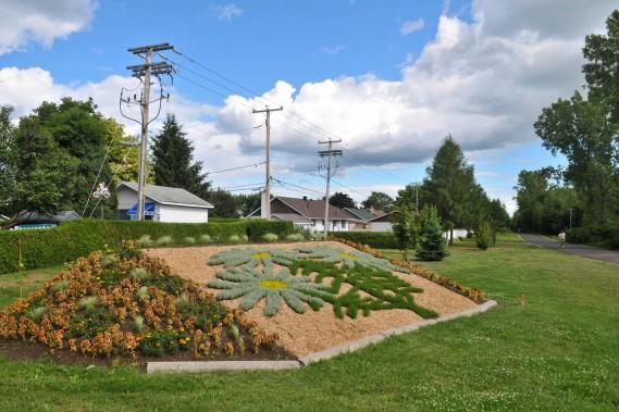 En bordure de la piste cyclable près du boulevard des Chenaux: une aster à feuilles de linaire, une fleur qui pousse essentiellement dans la région de Trois-Rivières. (Photo: Olivier Croteau, Le Nouvelliste)