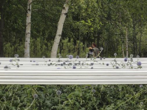 <em>Carré bleu sur fond blanc</em>, Kihan Kim et Ophélie Bouvet, France - Installée à la surface du jardin, une toile agit comme un filtre. La surface vibrante du cordage crée la confusion entre les parties immergées et submergées des plantes. Le résultat est une tapisserie vivante qui se dessine sous les yeux des visiteurs. (Photo Ophélie Bouve)