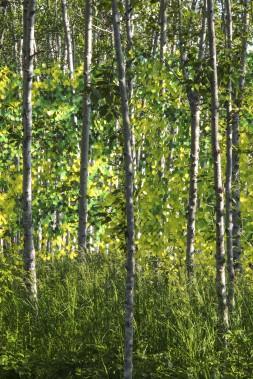 <em>Popple</em>, de Meaghan Hunter et Suzy Melo, Winnipeg - Ce jardin simule les sons et les images du peuplier-faux tremble, grâce à un plan vertical de disques multicolores qui dansent dans le vent en créant une mélodie et un buzz visuel comme les feuilles de cet arbre. (Photo Martin Bond)