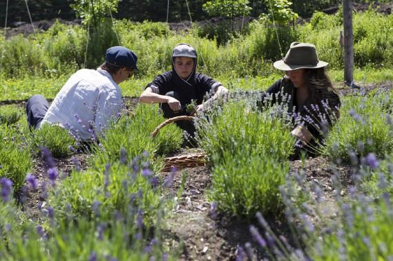 Une équipe de jeunes cueilleurs et de bénévoles prête main forte à Louise Vidricaire. (Le Soleil, Caroline Grégoire)