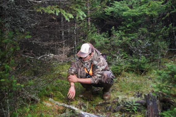 N'ayant pas toujours accès à de l'eau après l'éviscération des cerfs, le guide se dépannent avec la mousse humide de la forêt. ()