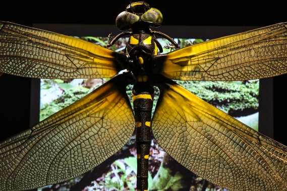 La sculpture de libellule format géant révèle des détails étonnants. (Patrick Woodbury, LeDroit)