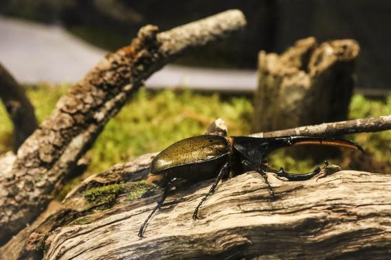 Un scarabée (Patrick Woodbury, LeDroit)