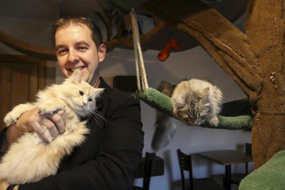 Le propriétaire du Café chat Sibérien, Michael Lebrun, avec le chat Konstantin (Patrick Woodbury, LeDroit)