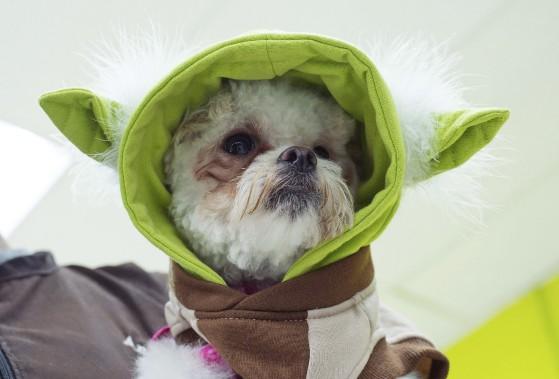 Costume de Yoda pour chien (AFP, Valérie Macon)